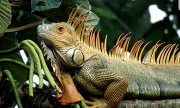 PALO VERDE TROPICAL DRY FOREST NATIONAL PARK WILDLIFE TOUR.